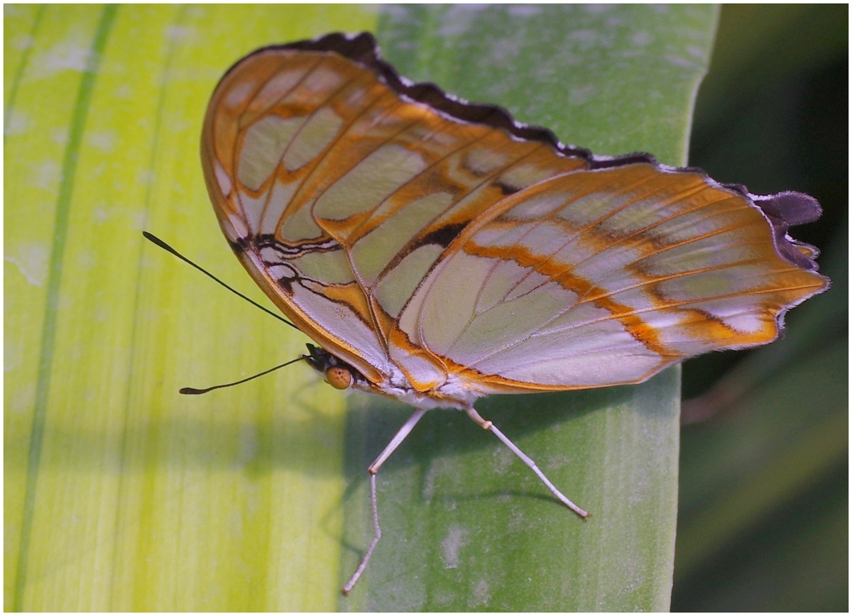 Papillons en Fêtes 2015 16823929950_8403882b93_o