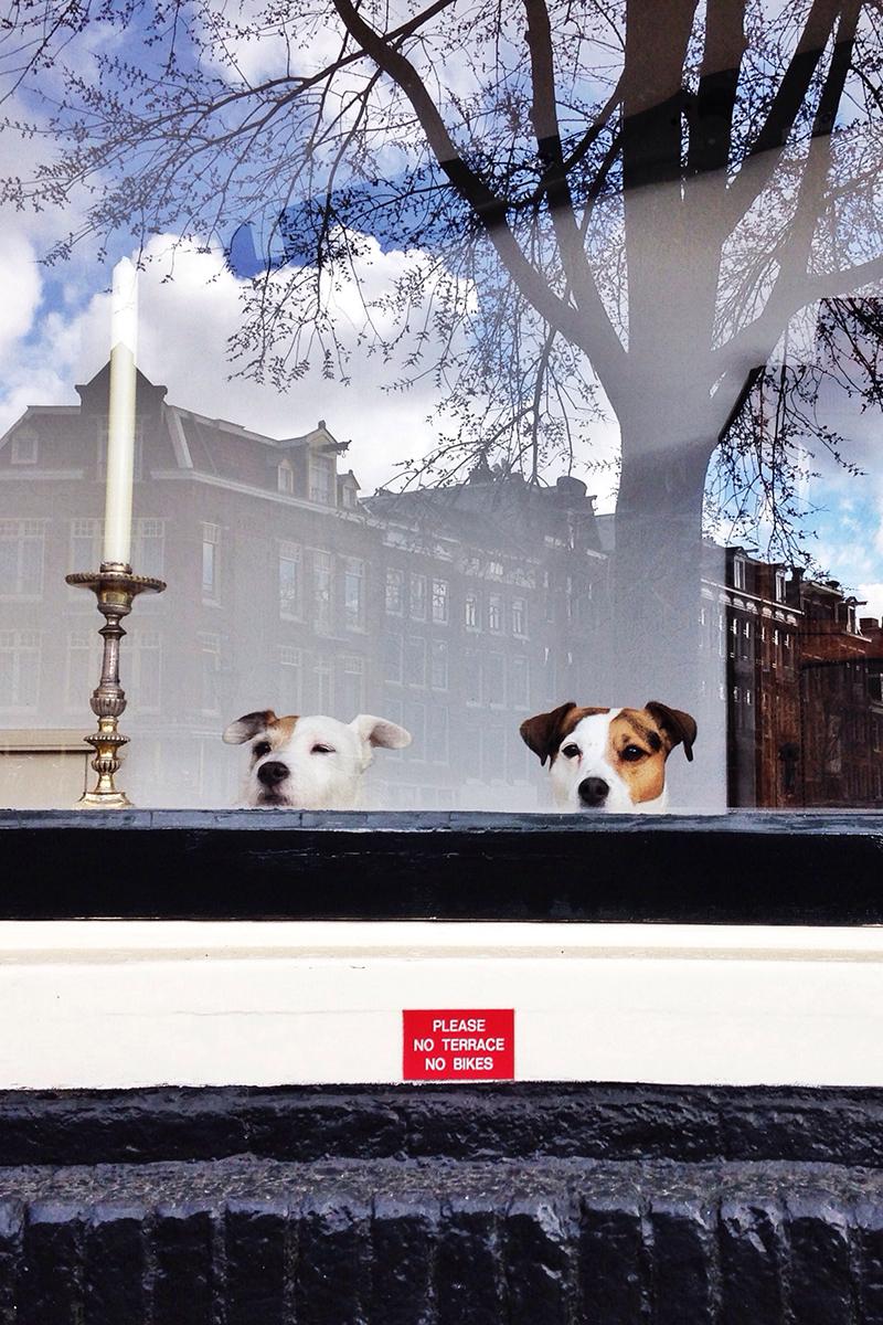 hunde in amsterdam