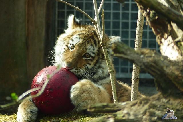 Zoo Eberswalde 22.03.2015   212