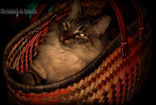 Le chat de Drecci dans MON panier !!