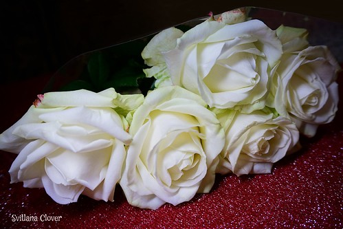 White roses are a symbol of purity, innocence and eternal love.