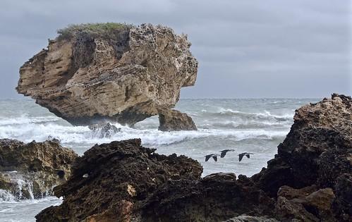 sea storm australia western cormorant pied rockingham pointperon