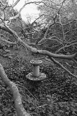 overgrown fountain