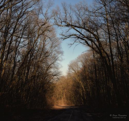 road primavera forest landscape spring ukraine