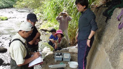 特生中心研究人員和大甲溪生態協會每月一次的相對族群調查,同時測量水質和水量的變化,2013.11.14,大甲溪生態協會提供