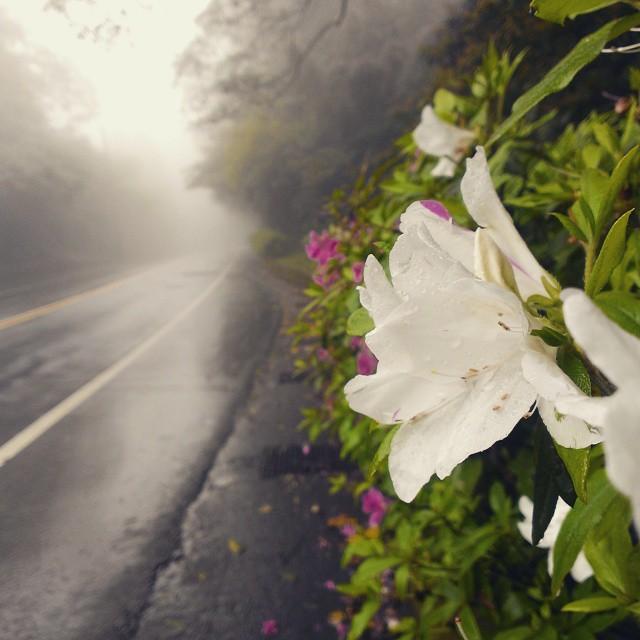 台北宜蘭-雲海公路。台灣美麗公路-17度C隨拍 (12)