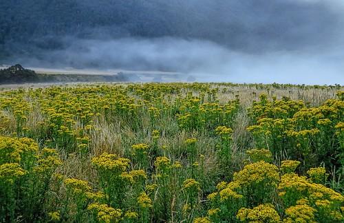 morning mist, Aspiring Hut, NZ