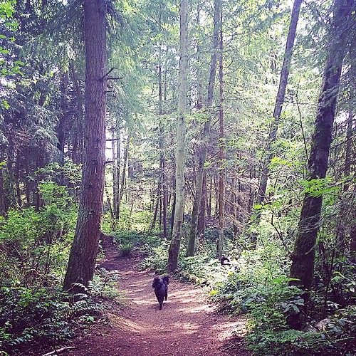 My Couch to 5K training grounds 🌲