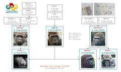 Gorilla Family - Barcelona - Xebo's Group