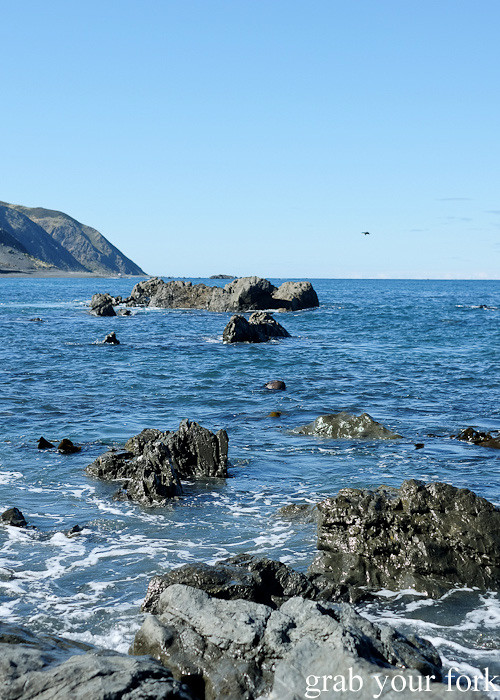 Volcanic rocks and blue water during the Seal Coast Safari, Wellington