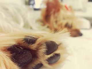 Paw ❤