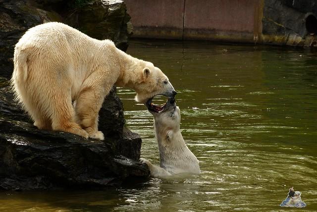 Tierpark Berlin 12.04.2015 247