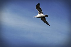 Vögel - Birds