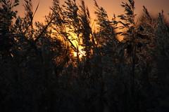 Fluffy autumn sunset