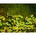 Le vert domine dans le parc-nature du Bois-de-l'Île-Bizard - 4 by Marie-Andrée Côté