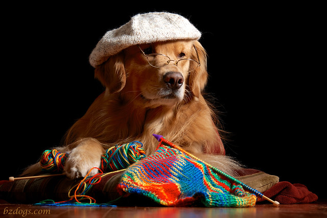 Real Goldens Knit