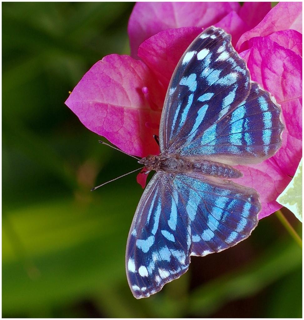 Papillons en Fêtes 2015 16389019474_6ce1ff4de7_o