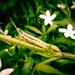 Grasshooper by செல்வபிரபு