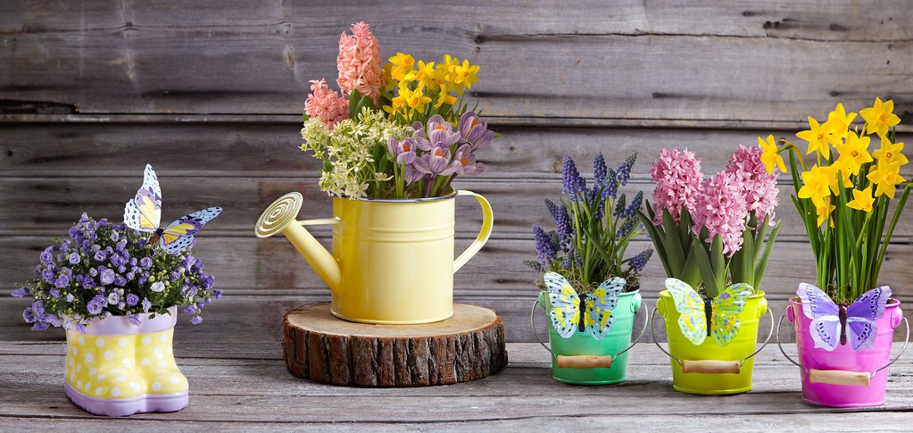Spring Collection Flowers Potted Plants Daffodil Hyacinth Flickr