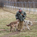 Wolves at Wolf Park IN by Max Goldberg
