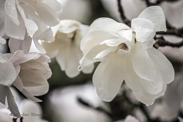Ault Rain Blooms_0026a