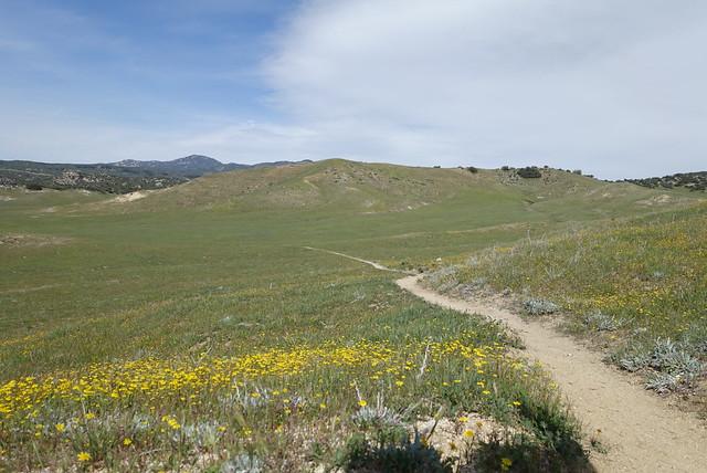 Wonderful grassland