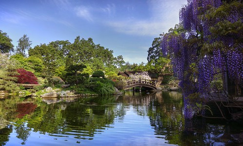 california reflection garden japanesegarden spring raw day fuji saratoga clear bloom hdr wisteria waterreflection hakonegardens 3xp photomatix fav200 nex6 selp1650