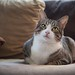 Fat cat by Una06