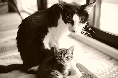 Bun and Koharu