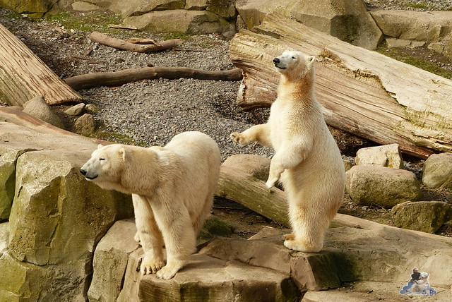 Zoo am Meer 07.03.2015   87
