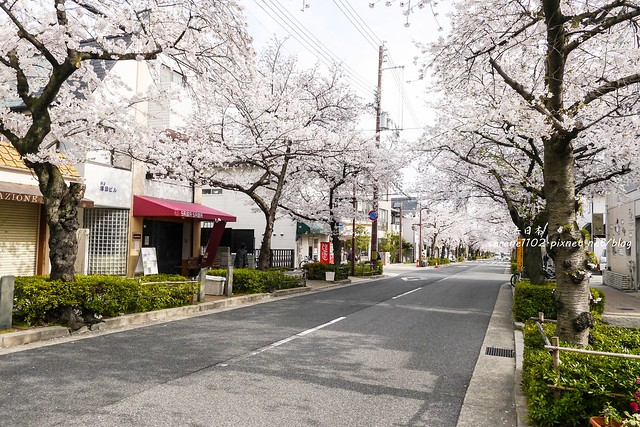 0331D6姬路、神戶_261