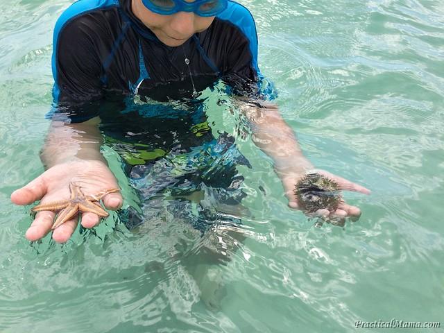 Starfishseaurchin