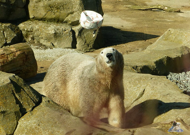 Zoo am Meer 08.03.2015  128