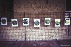 Toscana Fotofest 2013