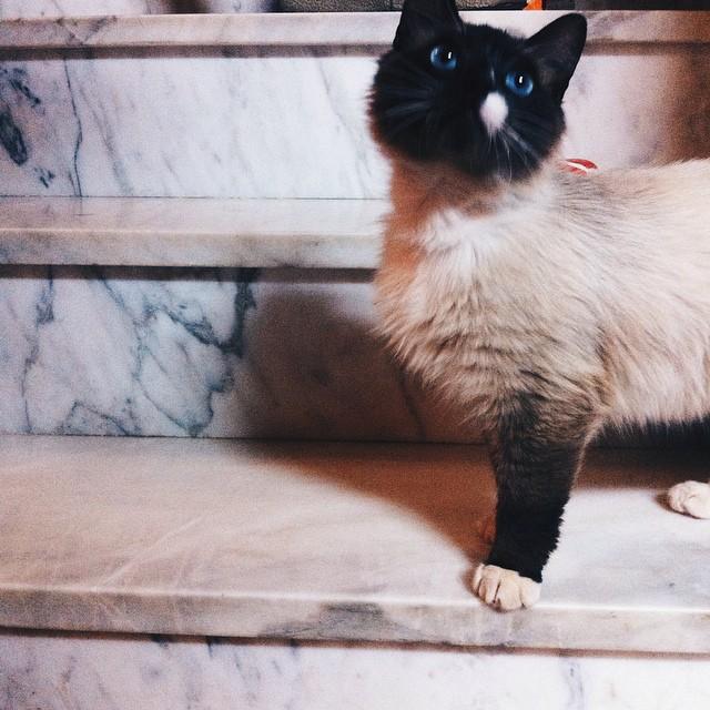 Kitty de rua que gosta de invadir casas e de companhia.