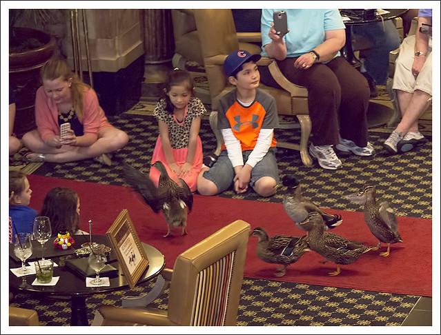 Peabody Hotel Ducks 2015-04-11 5