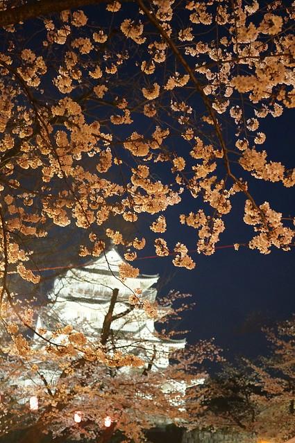 Sakura and Castle 03