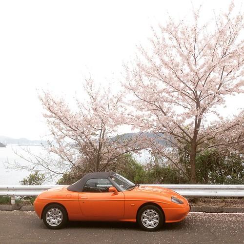 雨上がりの海辺の桜。 タイヤ交換したのでテストドライブ。