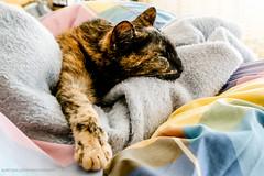 Fotosession mit Katze Ivy