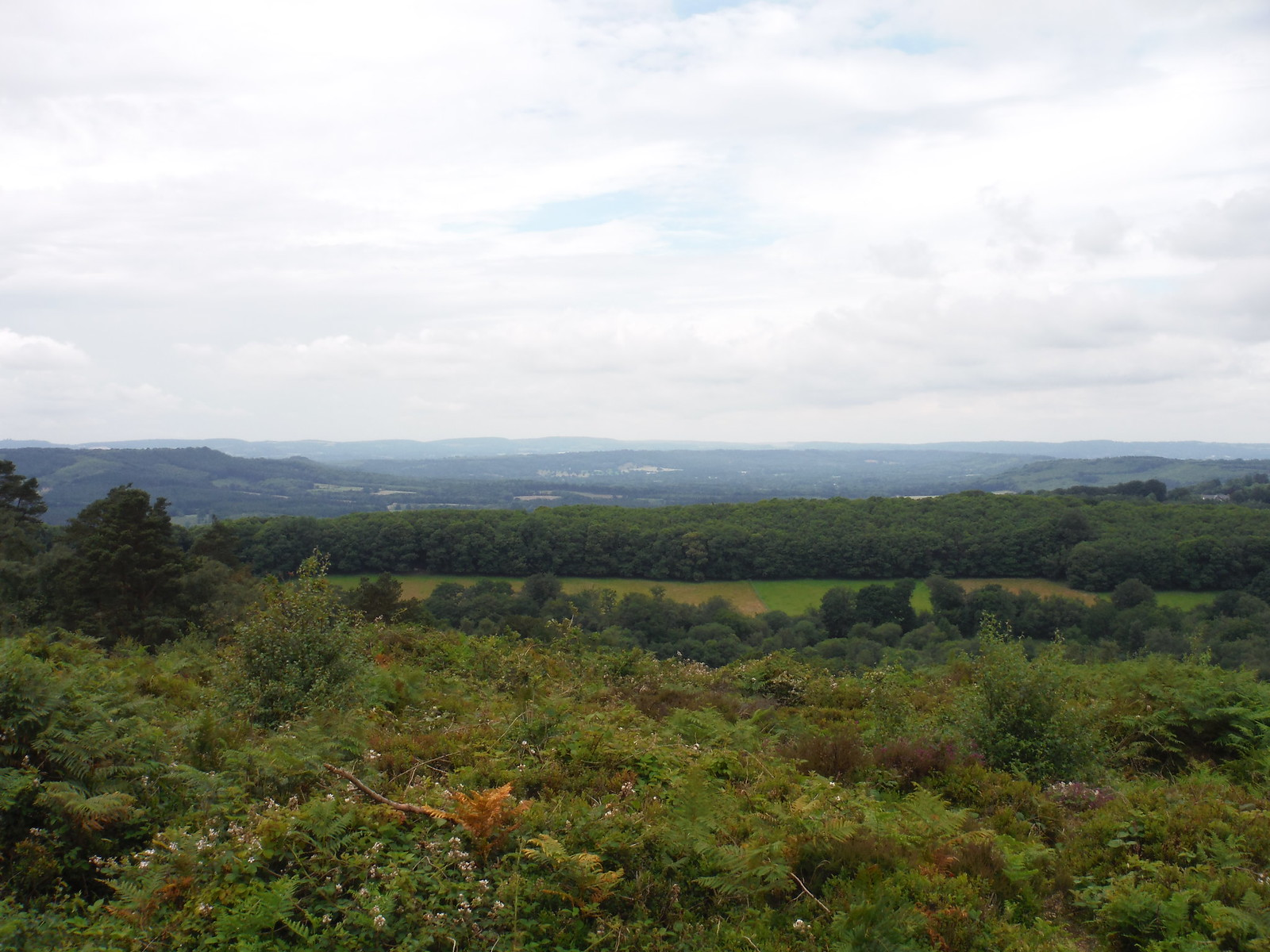Westerly View from Black Down SWC Walk 48 Haslemere to Midhurst (via Lurgashall or Lickfold)