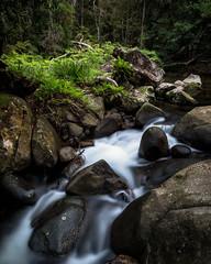 Coombadhja Creek, Washpool NP
