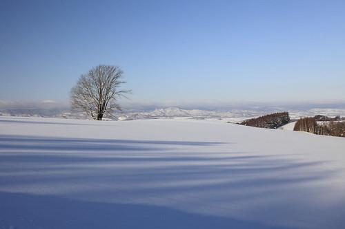雪原に立つ哲学の木
