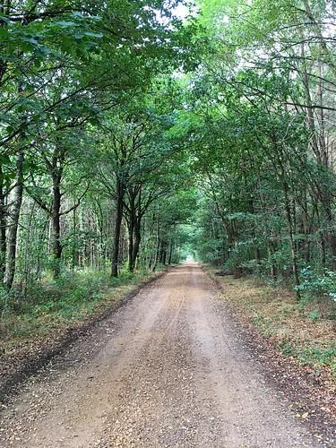 De bossen van Solterheide