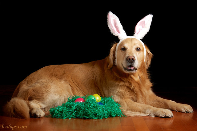 Easter Bunny?