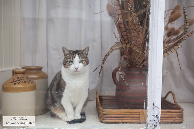 Cat sitting by a window sill at a shop