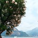 Flower on Bellagio Lake Front (3)