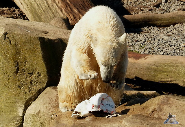Zoo am Meer 08.03.2015  79