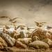 Sea Gulls by schlicht.karin