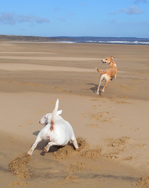 Dogs on Crimdon Beach