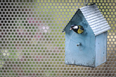 Birdhouse visited by a great tit